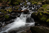 A creek flows through the mossy rocks of the forest in the Columbia River Gorge, Oregon