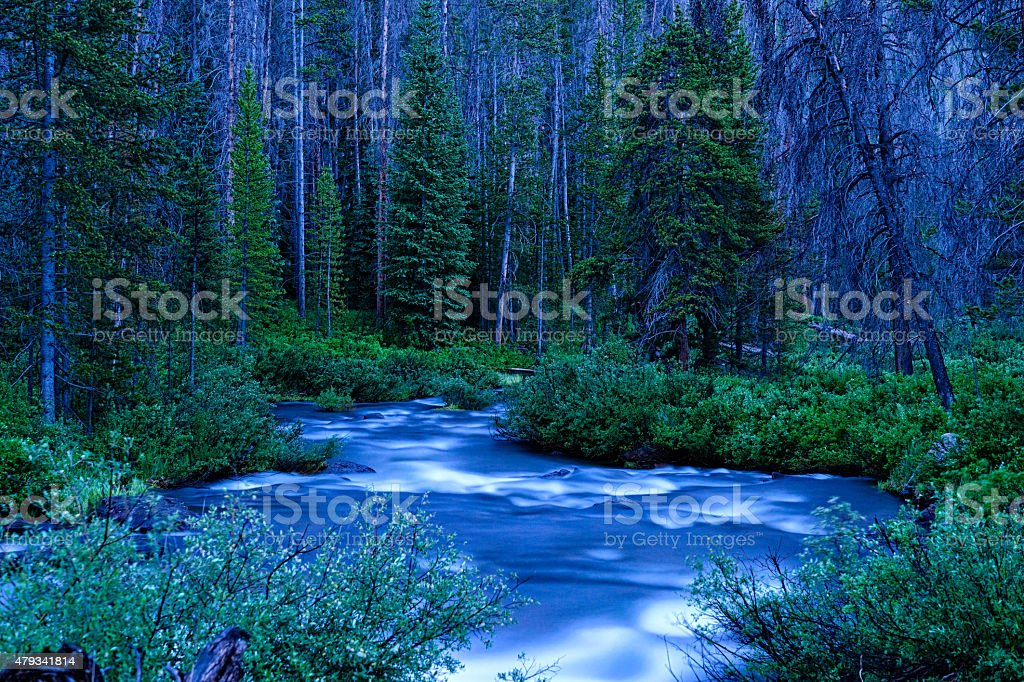 Creek Flowing Through Forest stock photo