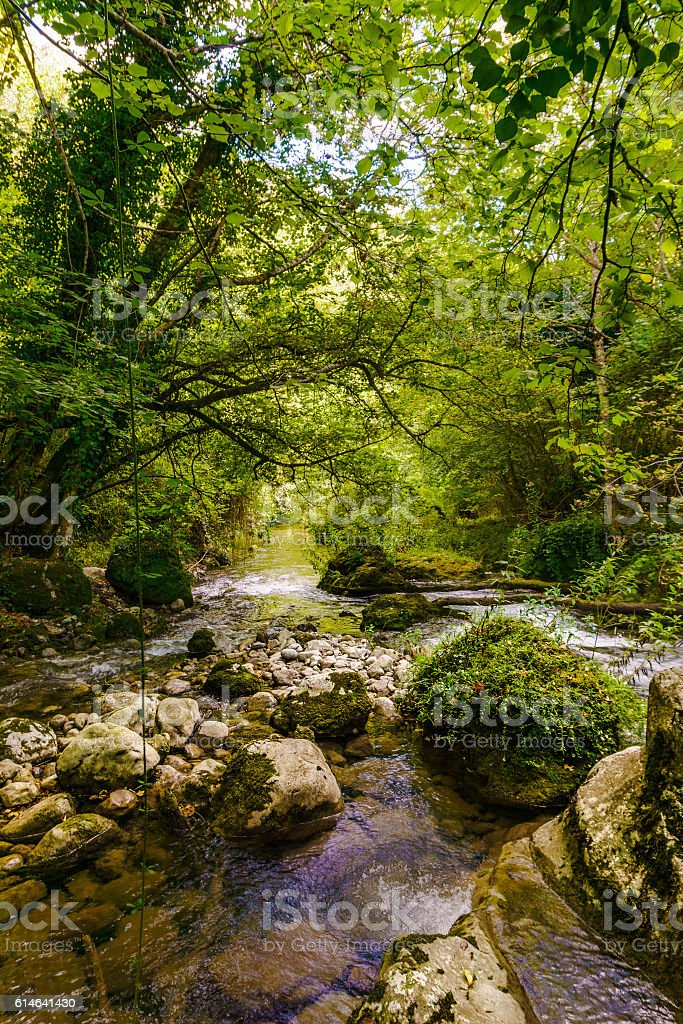 Creek flowing through the jungle stock photo