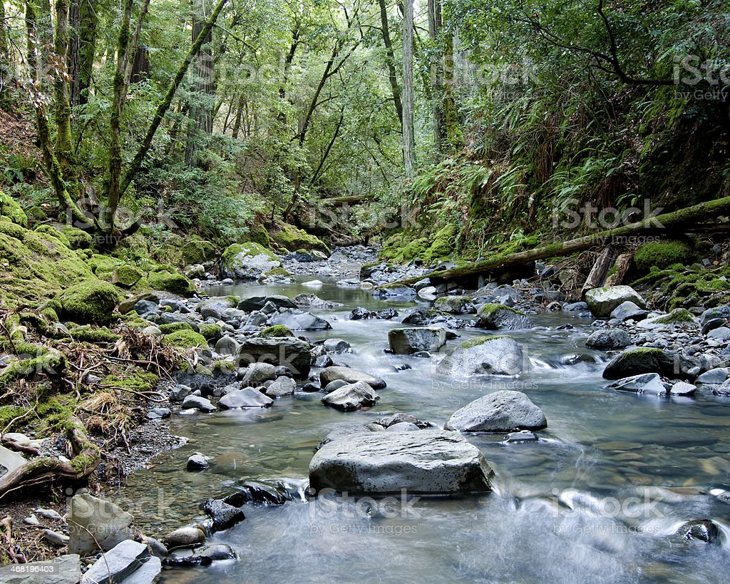 Creek Flowing Through Wooded Valley royalty-free stock photo