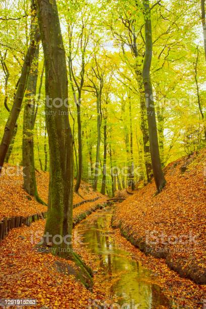 Photo of Creek in a beach tree forest with brown leafs on the hills