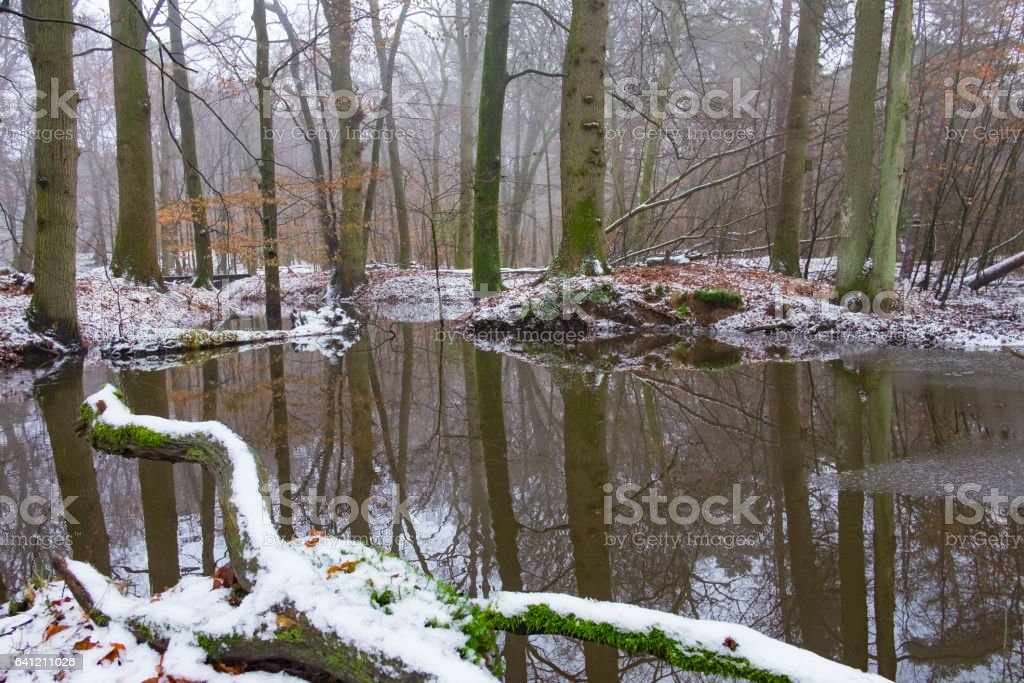 Creek in a forest during a cold foggy winter day stock photo