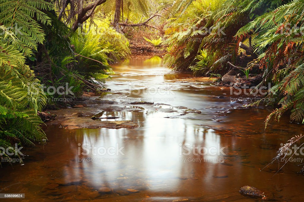Creek in Blue Mountains national park stock photo