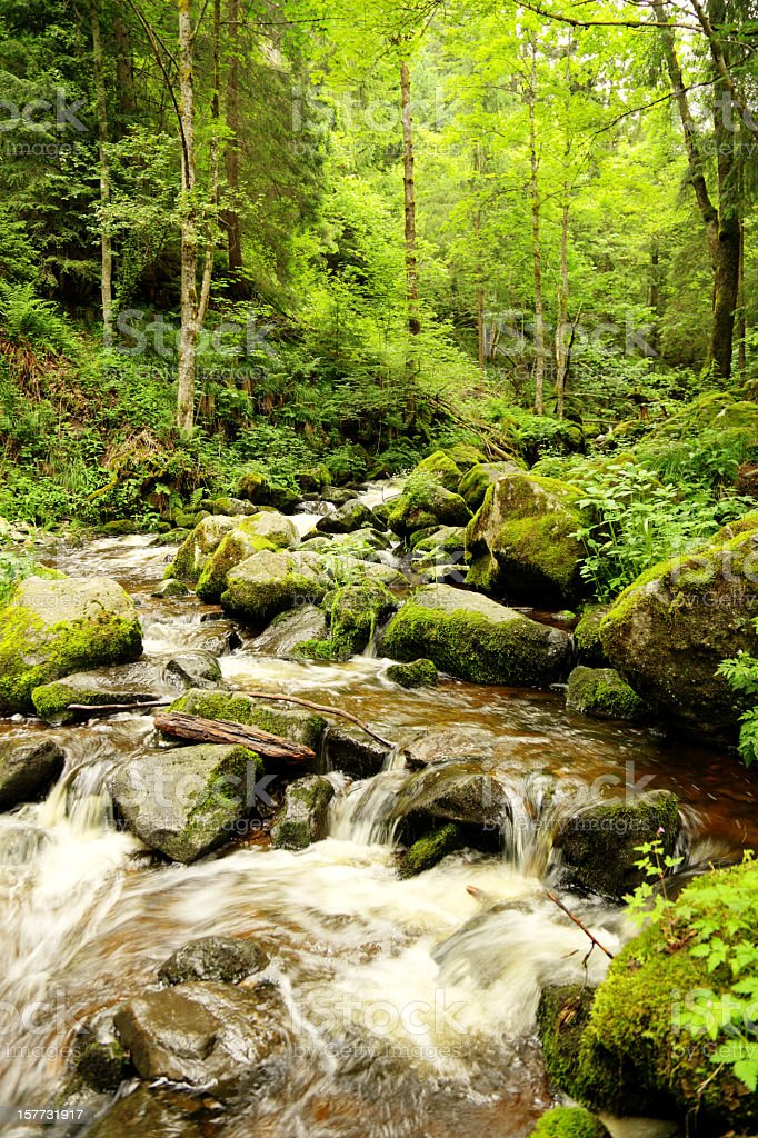creek in the Black Forest royalty-free stock photo