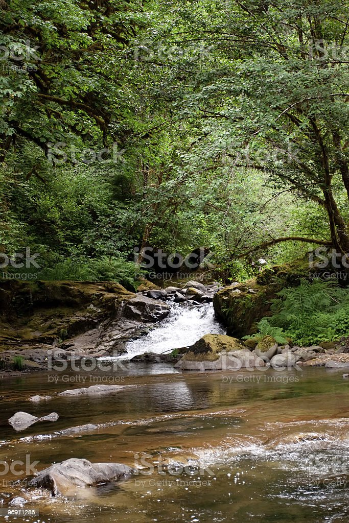 Creek in the Oregon wilderness royalty-free stock photo