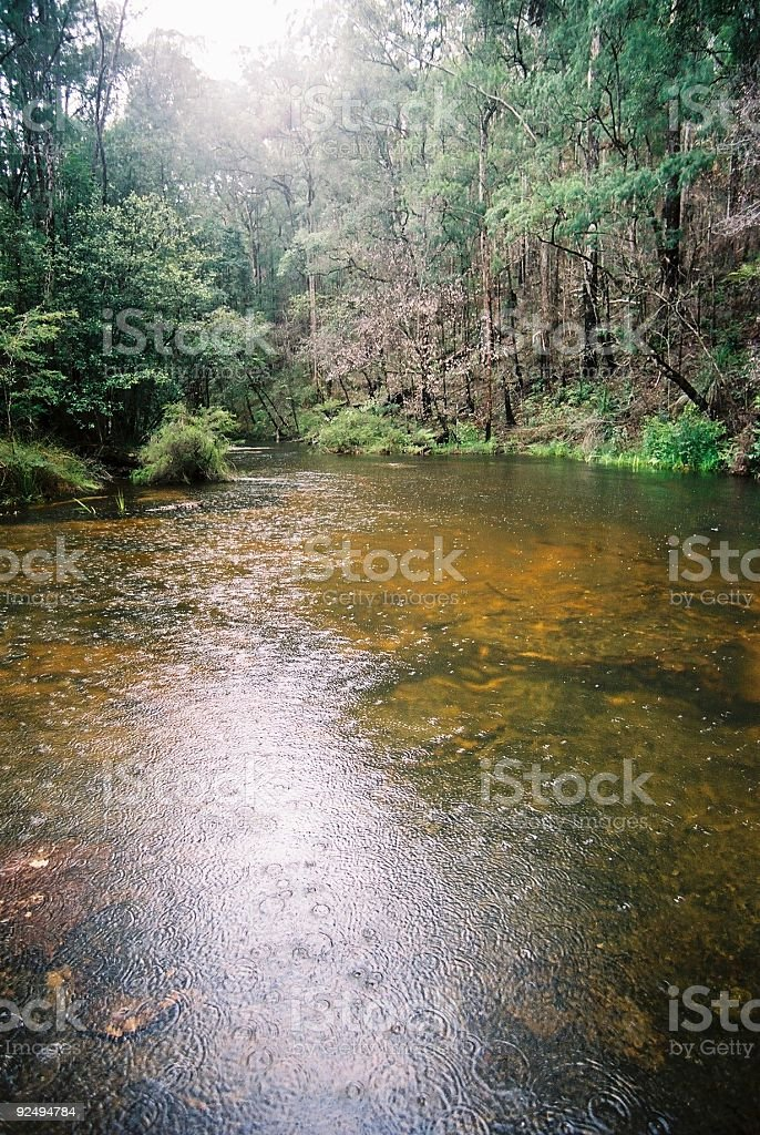 Creek In The Rain royalty-free stock photo