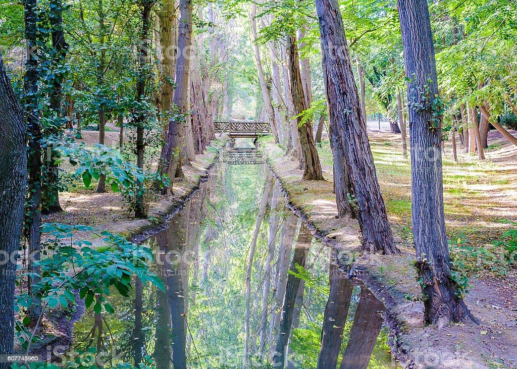 Creek  - foto de stock