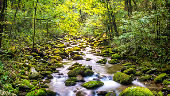 Water stream flowing along the Roaring Fork Motor Nature Trail in the Great Smoky Mountain National Park