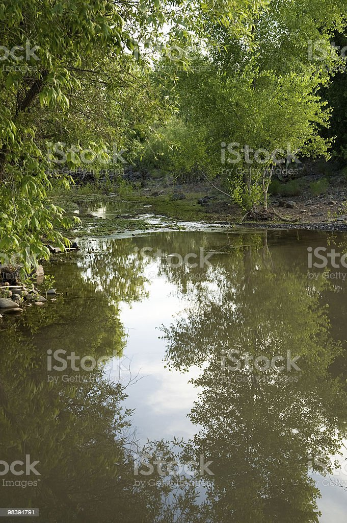 Creek running through trees royalty-free stock photo