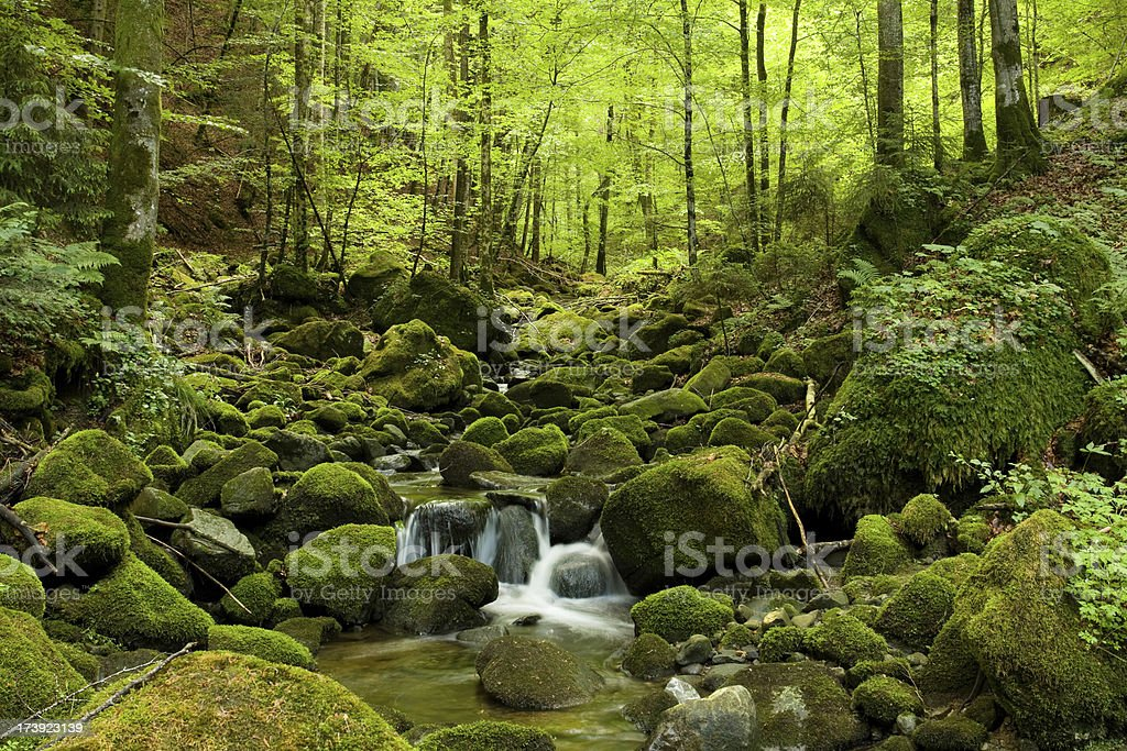 Creek running throught a dark forrest royalty-free stock photo