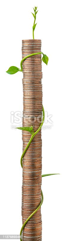 Creeper climbing plant climbing naturally up a stack of coins, concept image about wealth, business, growth, investment, green technology, investment etc., isolated on white. Clipping path included.