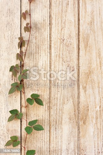 istock Creeper growing on an old painted wooden fence. 163676680