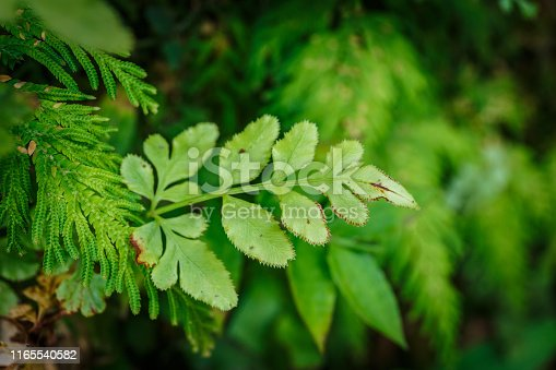 Backgrounds, Beauty, Beauty In Nature, Botany, Branch - Plant Part