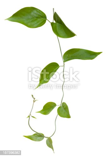 Creeping plant, great for use as a background or a border in 4 colour or a single tone. Clipping path included.