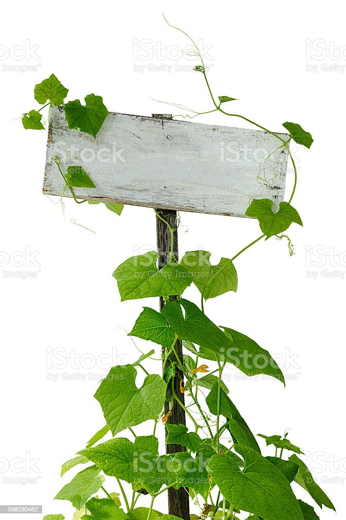 Creeper plants growing up and climbing an old garden sign. foto royalty-free