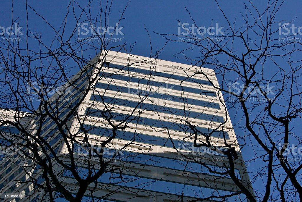 Creepy Bare Trees on Building Scene royalty-free stock photo