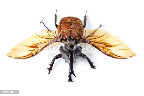 istock Creepy, crawly and it flies! 522150797