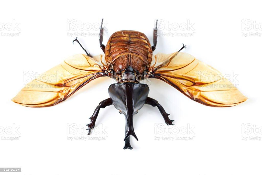 Creepy, crawly and it flies! stock photo