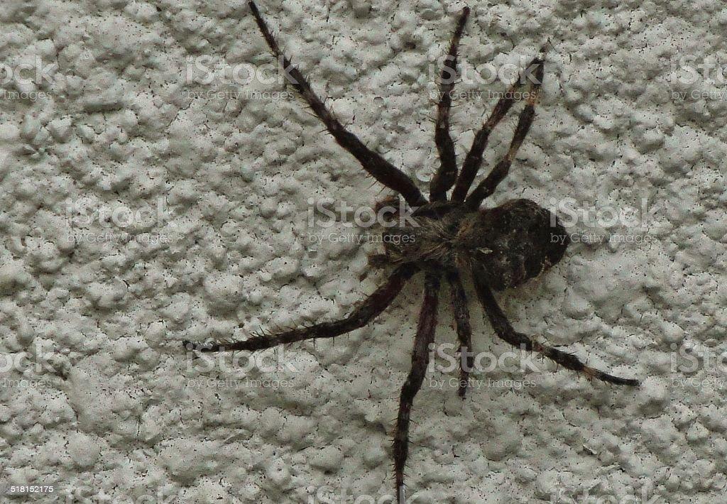 Creepy Crawly Big Spider stock photo