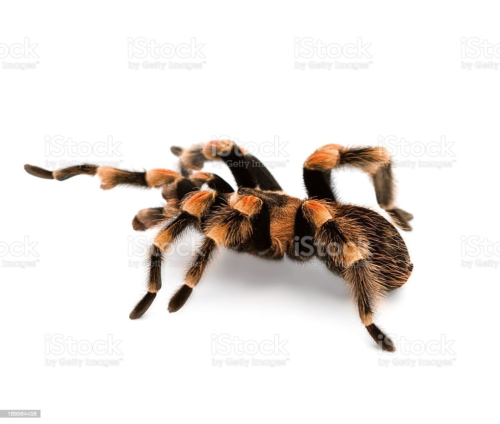Creepy crawly! stock photo