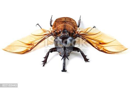 istock Creepy, crawly with wings 522153443