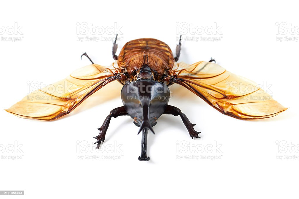 Creepy, crawly with wings stock photo