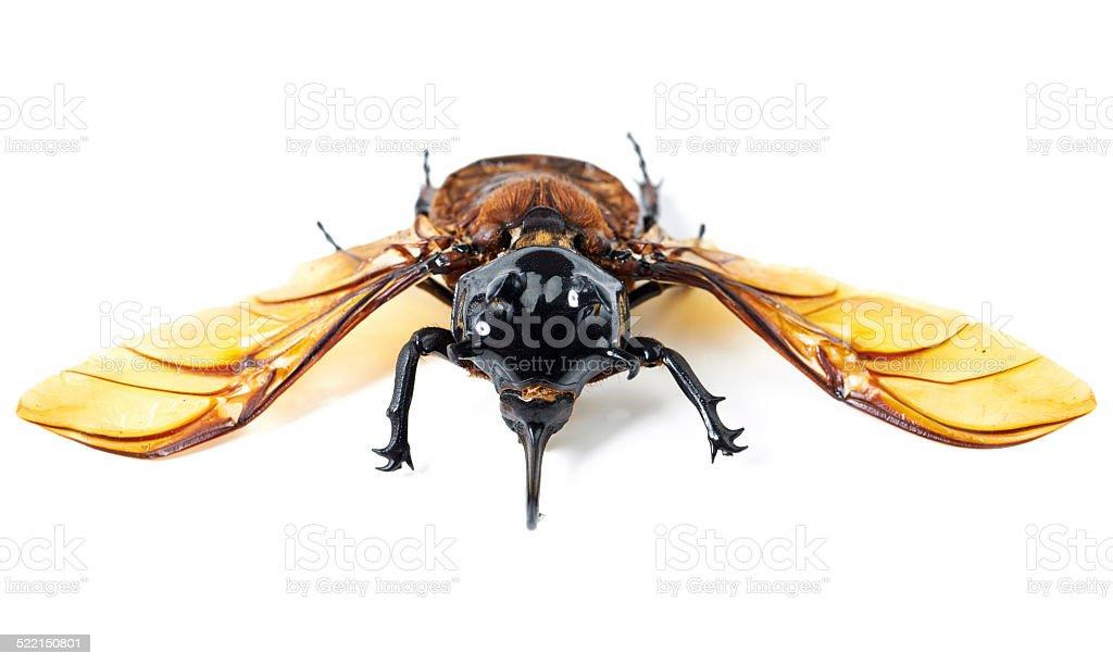 Creepy, crawly…but it flies! stock photo