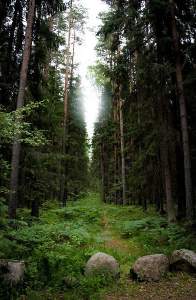 Creepy forest pathway stock photo
