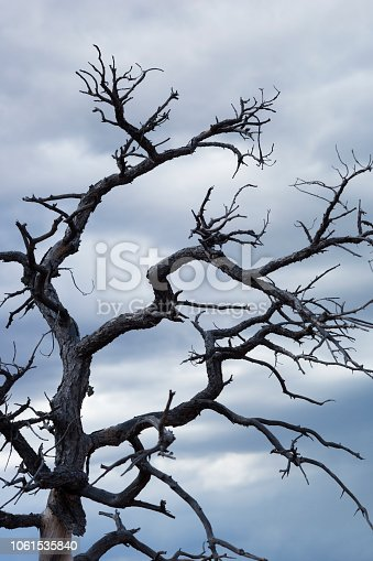 A bare gnarled tree with spooky looking branches at Yavapai scenic overlook, Sedona, Arizona, USA