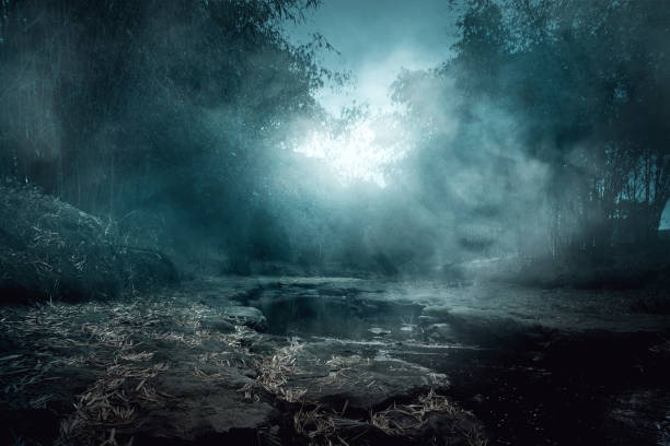 creepy river - trees in mist stock pictures, royalty-free photos & images
