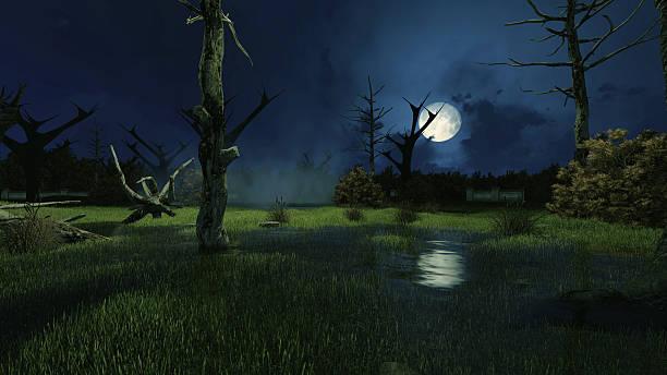 Creepy swamp at dark misty night stock photo