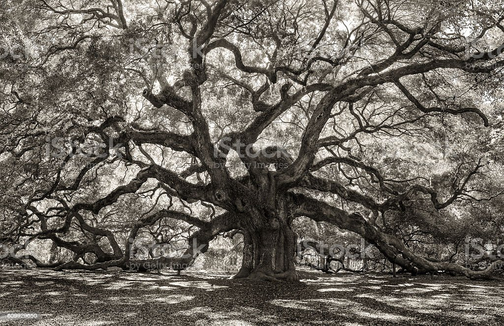 Creepy Tree In Old Forest Stock Photo Download Image Now Istock