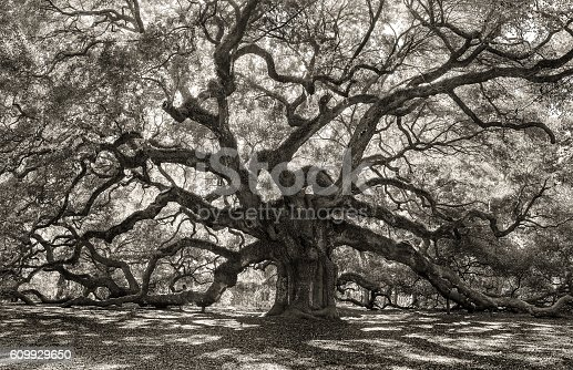 istock Creepy Tree in Old forest 609929650