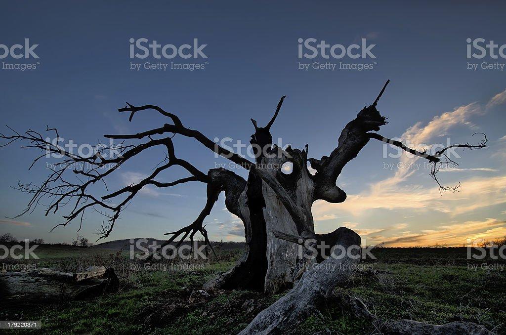 Creepy tree stock photo