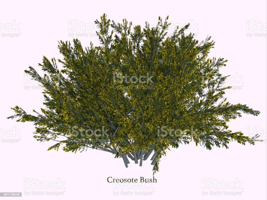 Creosote Bush stock photo