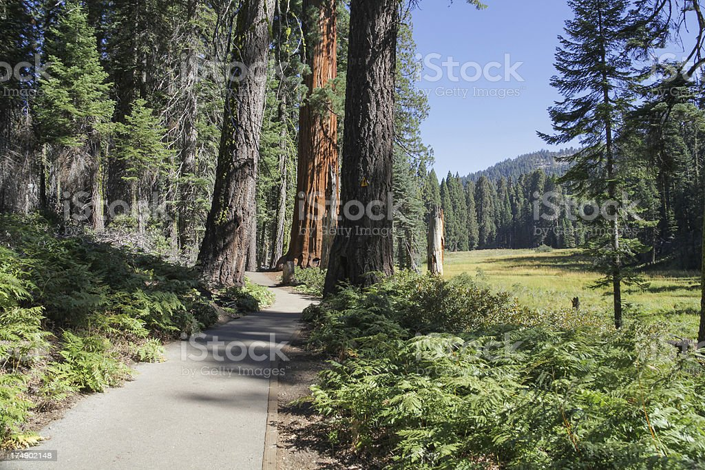 Crescent Meadow Trail Sequoia National Park royalty-free stock photo