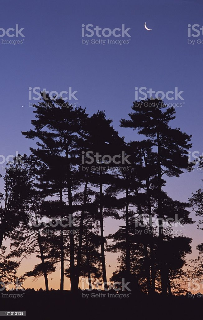 Crescent Moon and Trees stock photo