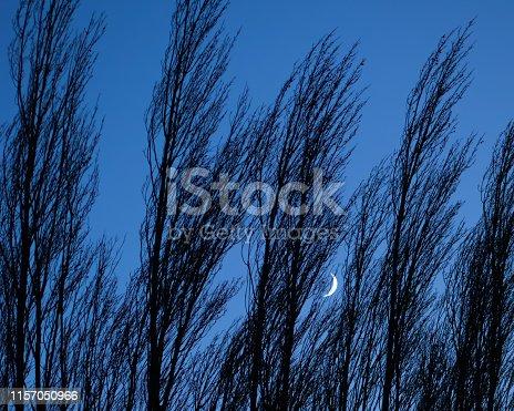 Mountain peeking through trees on a dark blue evening