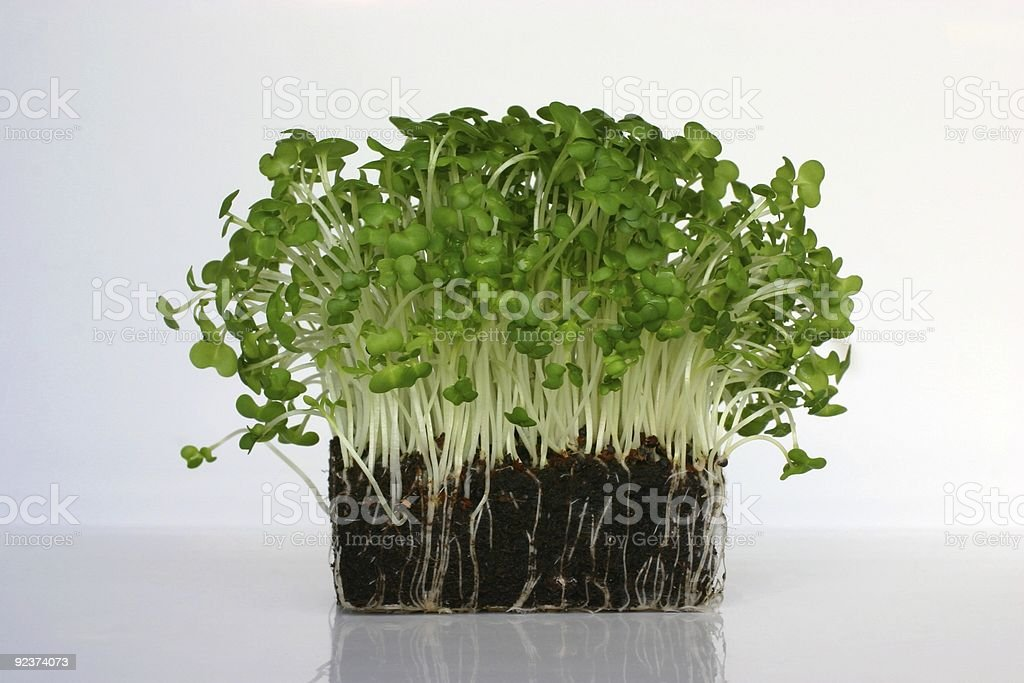 cress and mustard sprouts for garnishing salads royalty-free stock photo