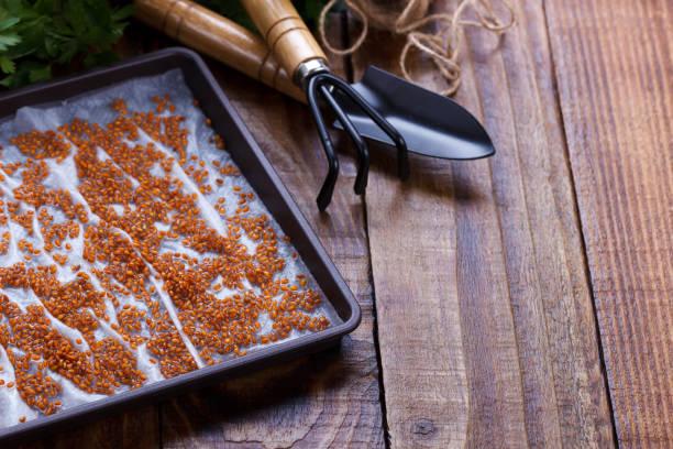 Sementes de salada de agrião - foto de acervo