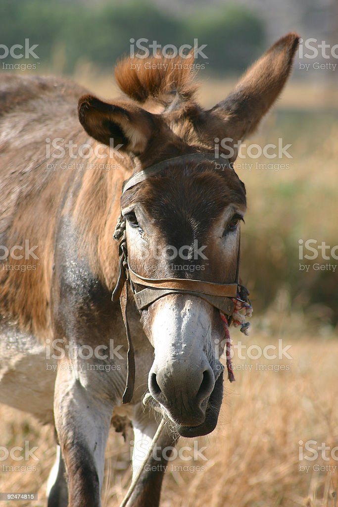 Crete / Donkey royalty-free stock photo