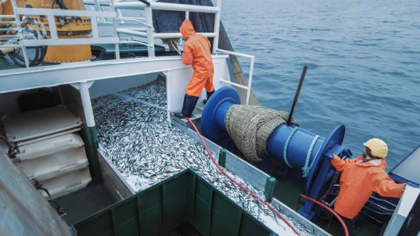 Crew of Fishermen Open Trawl Net mit Caugth Fish an Bord des kommerziellen Fischereischiffs – Foto