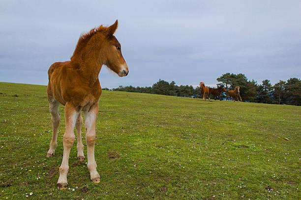 cria de caballo - campo margaridas amarelas correr imagens e fotografias de stock