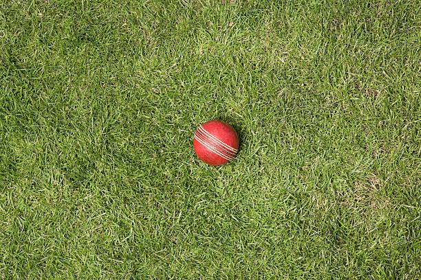 cricket ball auf Gras – Foto