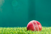 A Cricket ball sitting in the grass under the afternoon sun