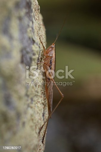 Cricket hanging on a tree trunk.
