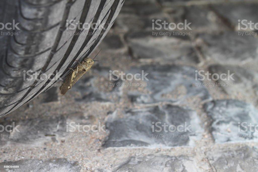 Sur une roue de cricket - Photo