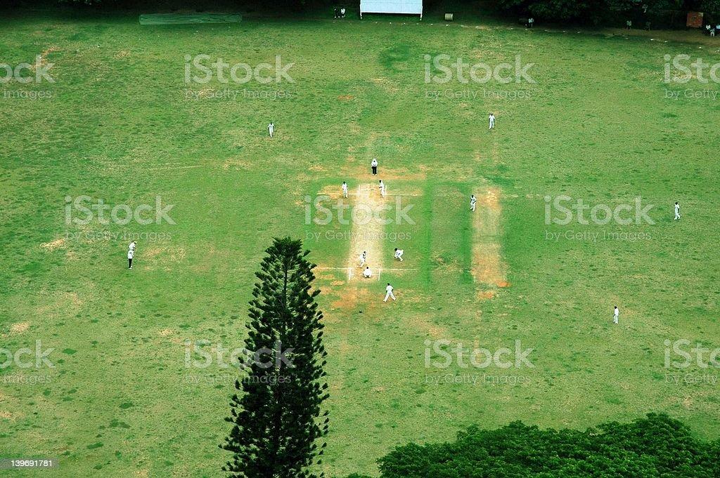 Cricket royalty-free stock photo