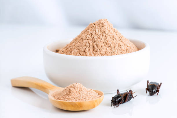 크리켓 분말 곤충 먹는 식품 요리 곤충 고기에서 만든 그릇과 나무 숟가락 흰색 배경에 그것으로 미래에 대 한 식용 단백질의 좋은 소스입니다. Entomophagy 개념입니다. 스톡 사진