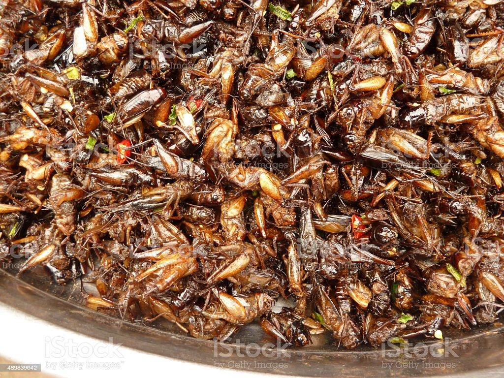 Cricket snacks stock photo